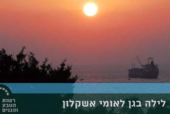 AshkelonNight