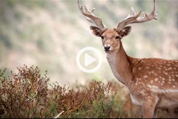 סרט תדמית לרשות הטבע והגנים